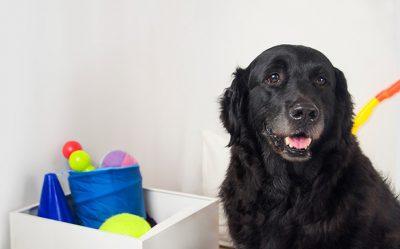 cuidados perros