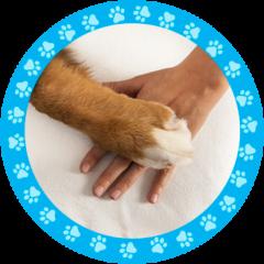 terapias con perros psicoterapias