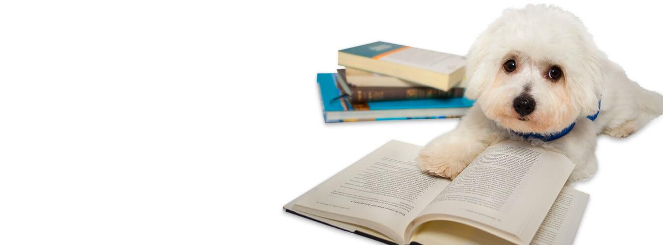 Educación con perros