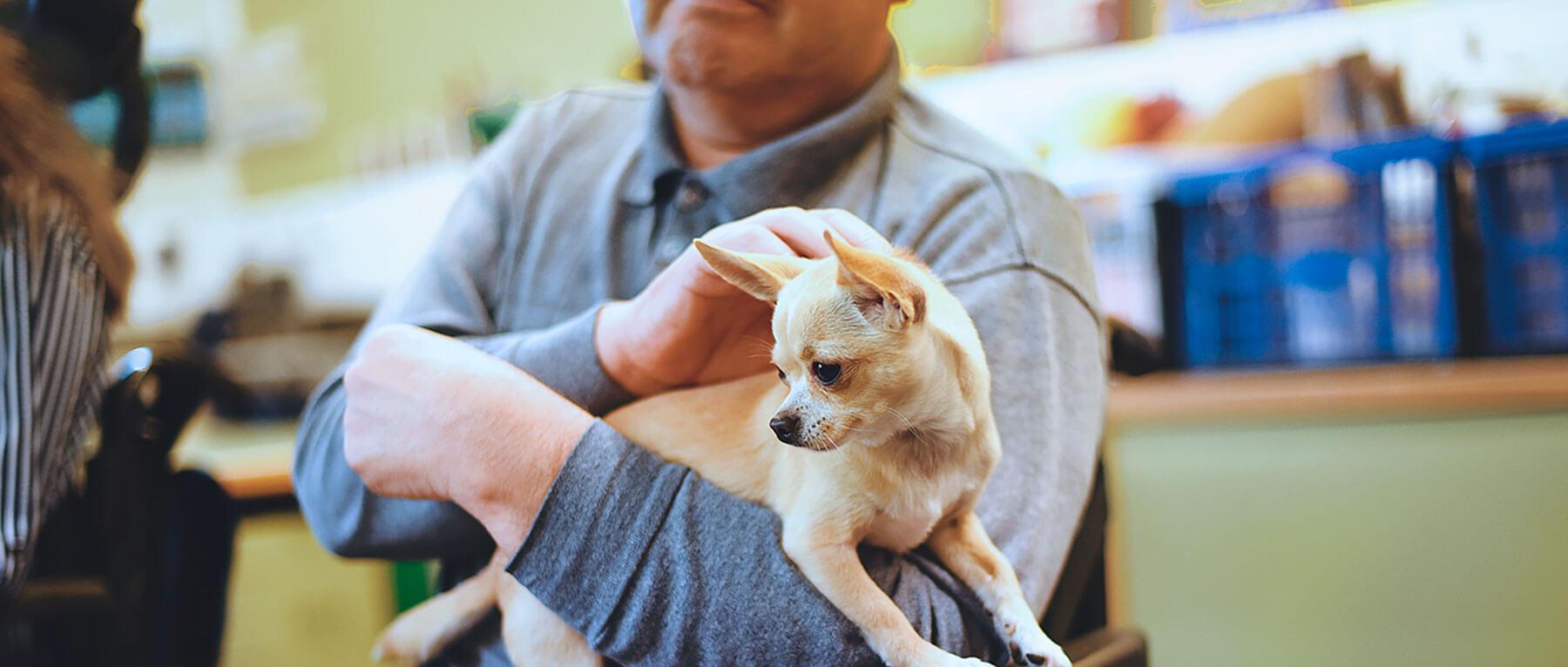 Sesión terapia con perros