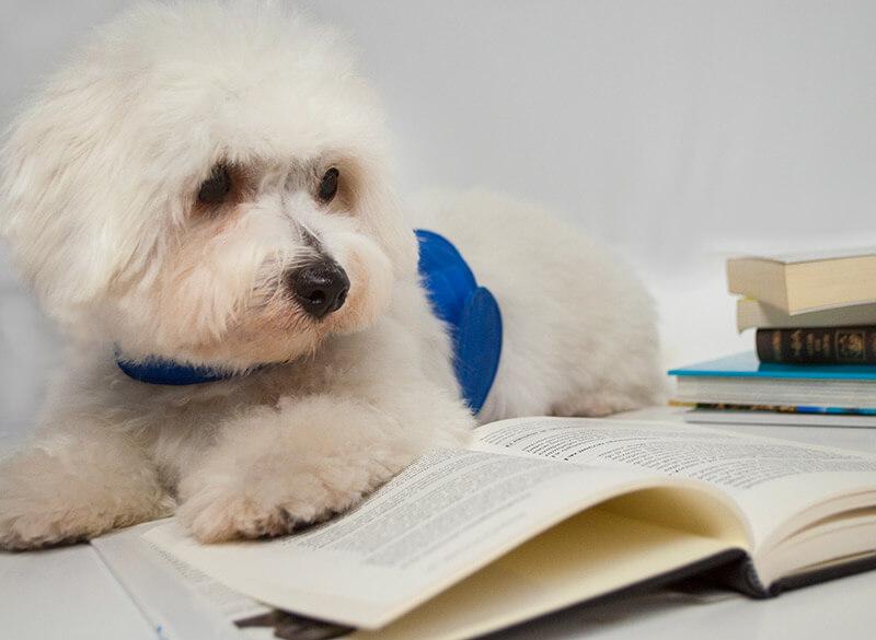 Beneficios educativos entrelazadogs