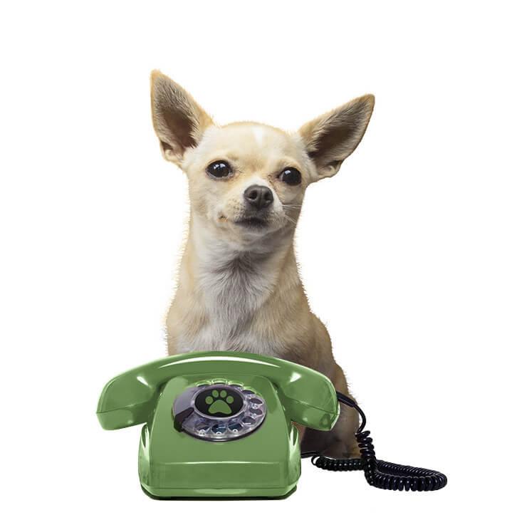 Contacto entrelazadogs formulario