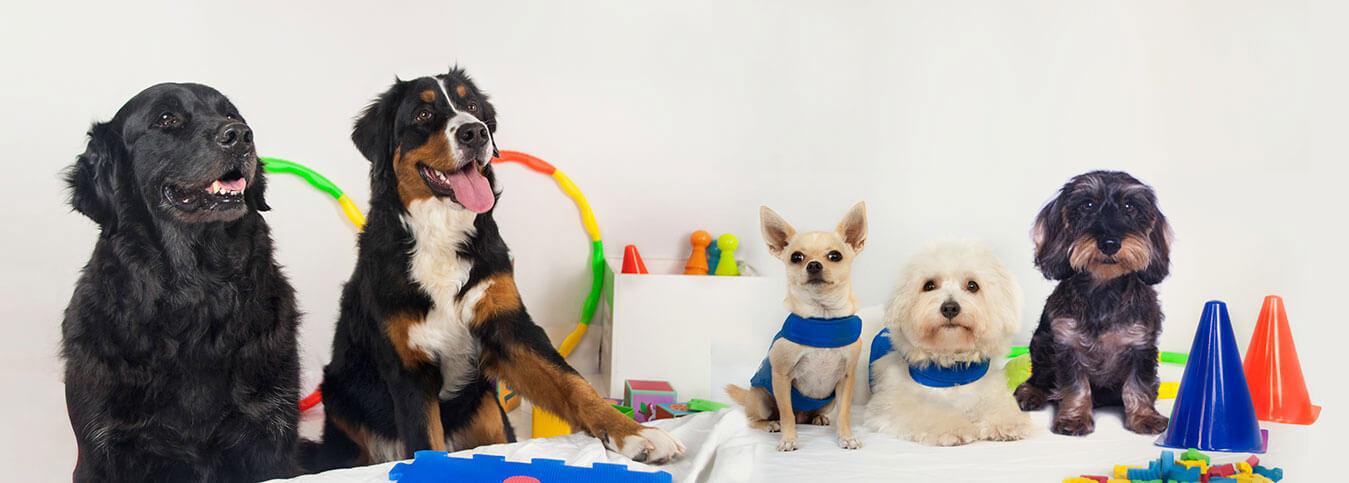 Perros de terapia entrelazadogs